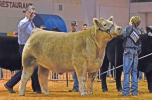 Cover photo for 2019 NC State Fair Market Steer Tag-in Dates & Locations