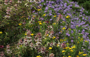 Cover photo for September Blooms in Pollinator Paradise